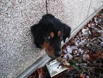 cachorro muro